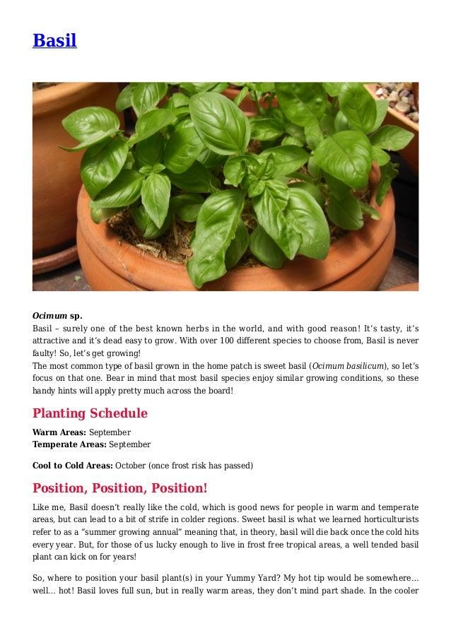 Basil Gardening