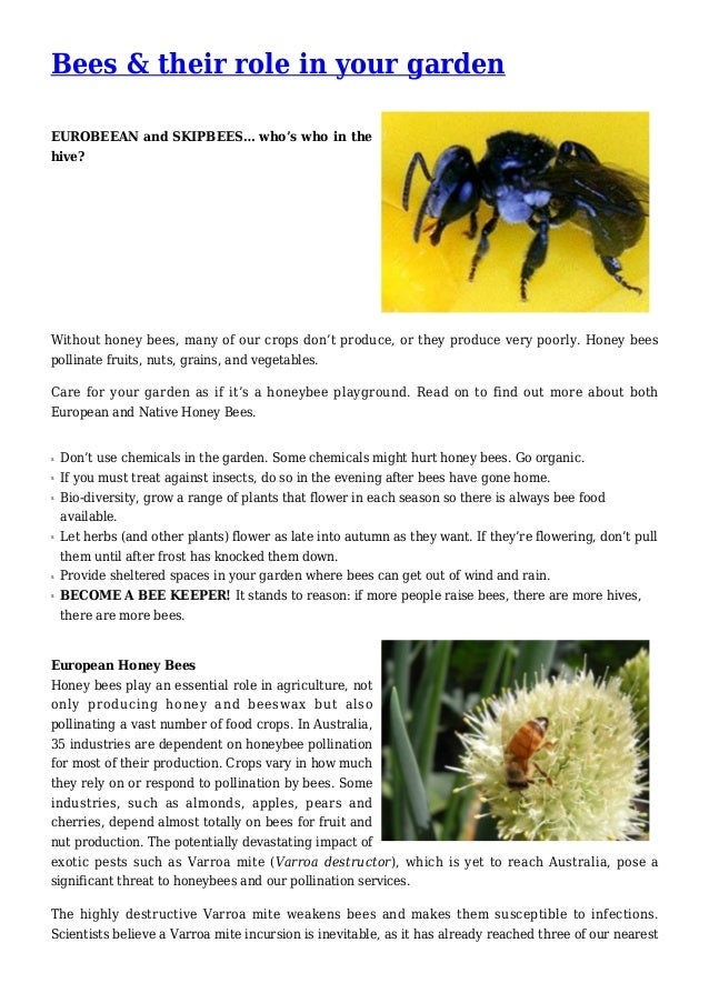 Bees & their role in your garden EUROBEEAN and SKIPBEES… who's who in the hive? Without honey bees, many of our crops don'...