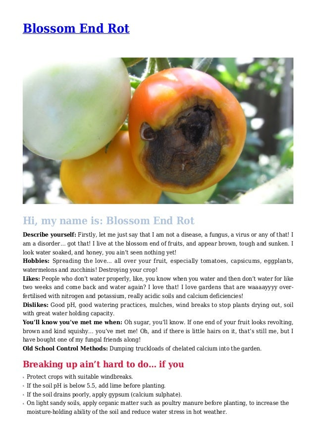 Blossom End Rot Hi, my name is: Blossom End Rot Describe yourself: Firstly, let me just say that I am not a disease, a fun...