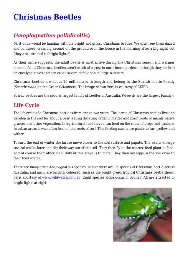 Christmas Beetles Pest Control in your Garden