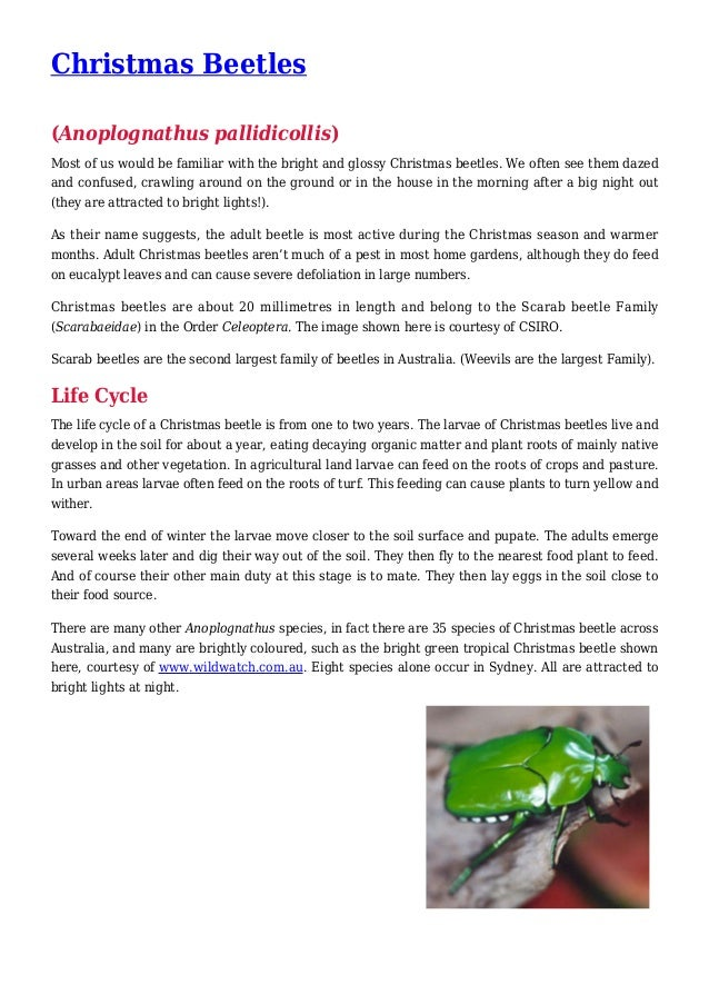 Christmas Beetles Pest Control in your Garden