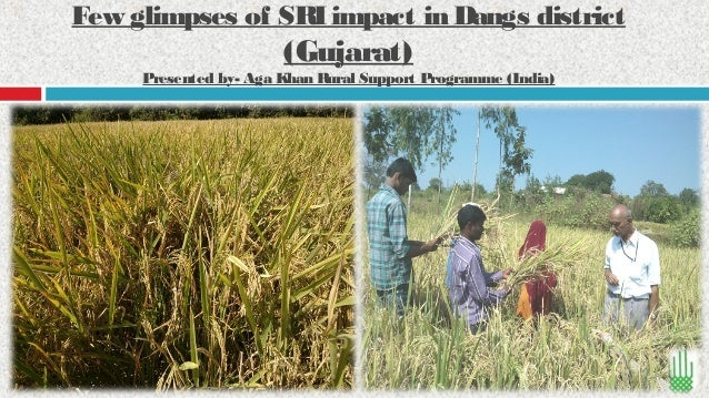 Few glimpses of SRI impact in Dangs district  (Gujarat)  Presented by- Aga Khan Rural Support Programme (India)