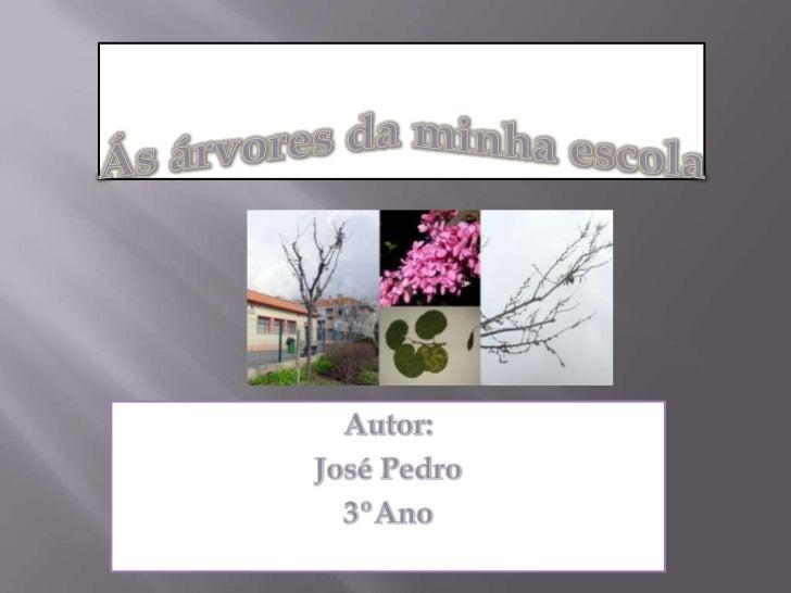 Ás árvores da minha escola<br />Autor:<br />José Pedro<br />3ºAno<br />
