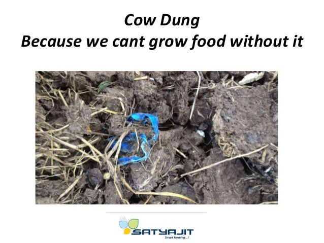 Cow Dung Because we cant grow food without it