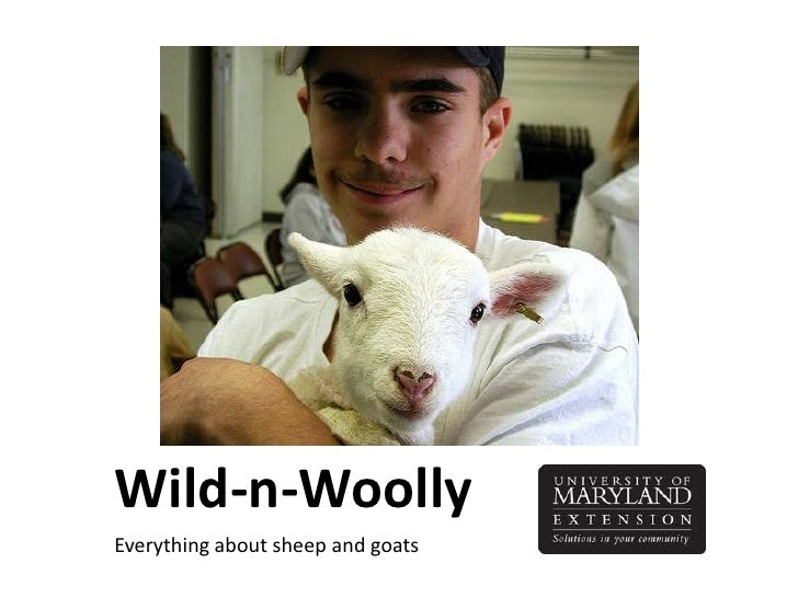 All about sheep and goats