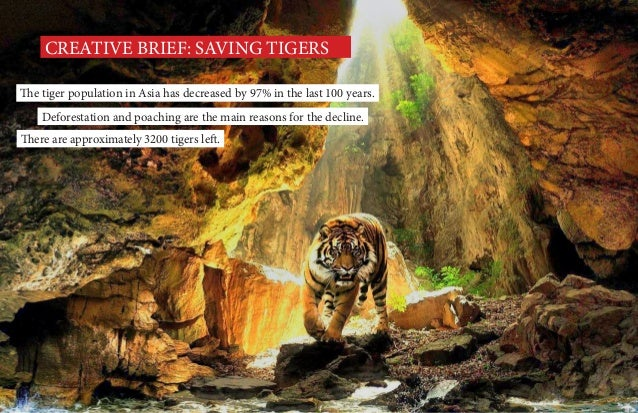 CREATIVE BRIEF: SAVING TIGERS The tiger population in Asia has decreased by 97% in the last 100 years. Deforestation and p...