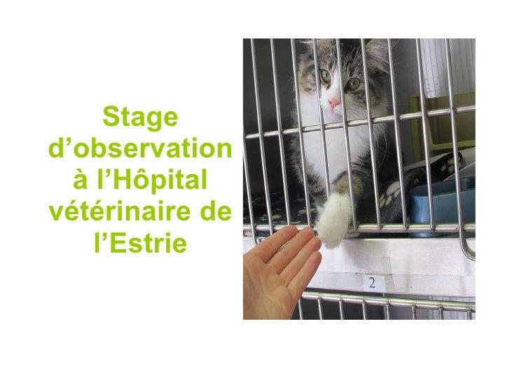 Stage d'observation à l'Hôpital vétérinaire de l'Estrie