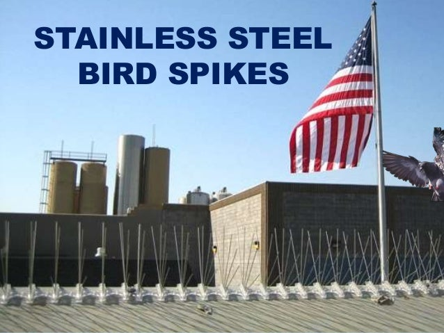 Introduction to Stainless Steel Bird Spikes