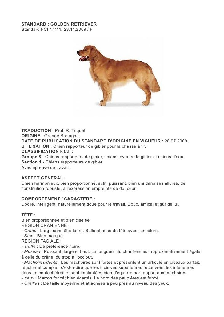 STANDARD : GOLDEN RETRIEVERStandard FCI N°111/ 23.11.2009 / FTRADUCTION : Prof. R. TriquetORIGINE : Grande Bretagne.DATE D...