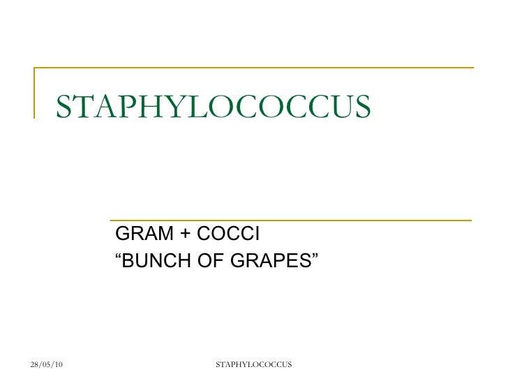 Staphylococcus Diagram staphylococcus aureus bacterium labeled diagram ...