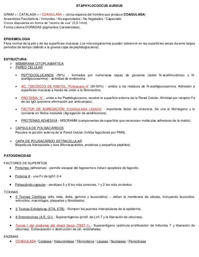 STAPHYLOCOCCUS AUREUS GRAM + / CATALASA + / COAGULASA + (única especie del hombre que produce COAGULASA) Anaerobios Facult...