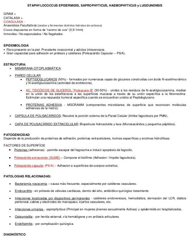 STAPHYLOCOCCUS EPIDERMIDIS, SAPROPHYTICUS, HAEMOPHYTICUS y LUGDUNENSIS GRAM + CATALASA + COAGULASA - Anaerobios Facultativ...