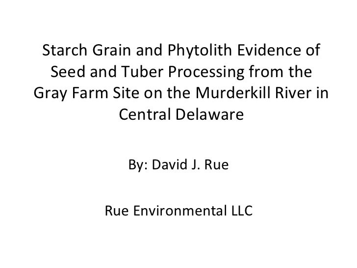 Starch Grain and Phytolith Evidence of  Seed and Tuber Processing from theGray Farm Site on the Murderkill River in       ...