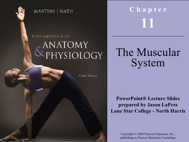 C h a p t e r 11 The Muscular System PowerPoint® Lecture Slides prepared by Jason LaPres Lone Star College - North Harris ...