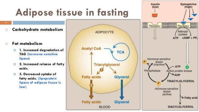 the oxidation of glucose to produce atp is an anabolic process
