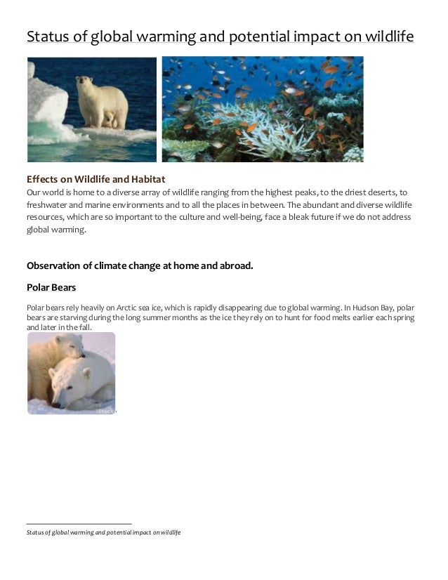 global warmings affect on wildlife The impact of global warming on animals and plants author: global warming effects on animals and the negative effects on wildlife are not only limited to.