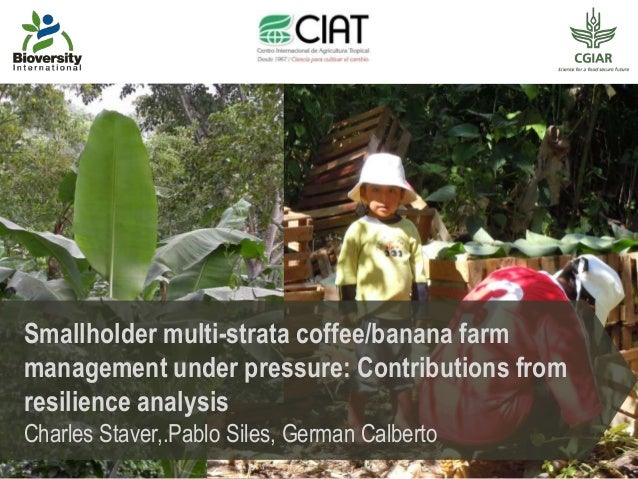Smallholder multi-strata coffee/banana farm management under pressure: Contributions from resilience analysis Charles Stav...