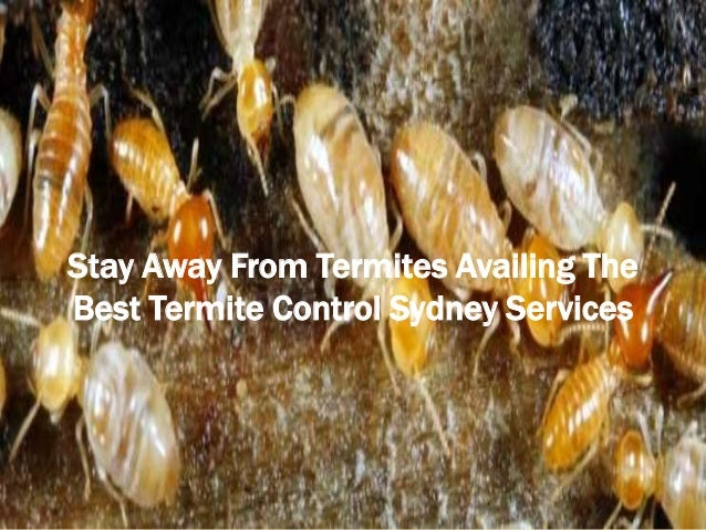 Stay away from termites availing the best termite control sydney services