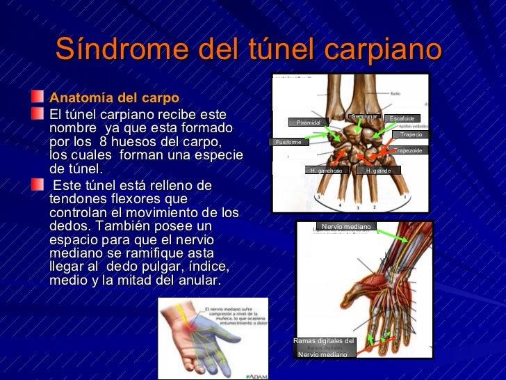 Sindrome Del Tunel Del Carpo Pdf Download