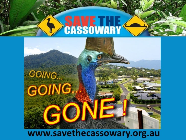 Save the Cassowary Presentation