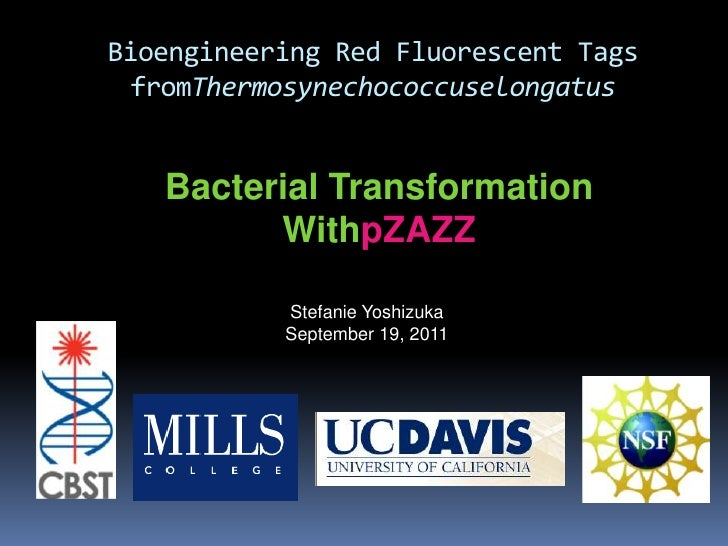 Bioengineering Red Fluorescent Tags fromThermosynechococcuselongatus<br />Bacterial Transformation WithpZAZZ<br />Stefanie...