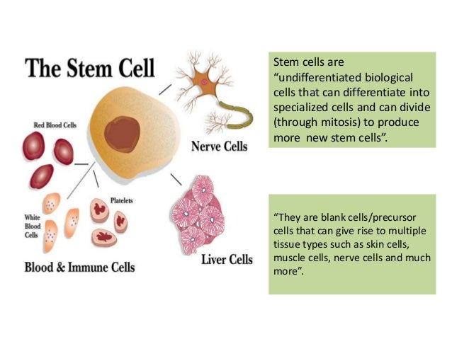 essays on stem cells When a stem cell divides it has the potential to be another stem cell or another type of cell, such as a muscle cell, blood cell or even brain cell scientist has found that stem cell can provide therapy for many diseases.