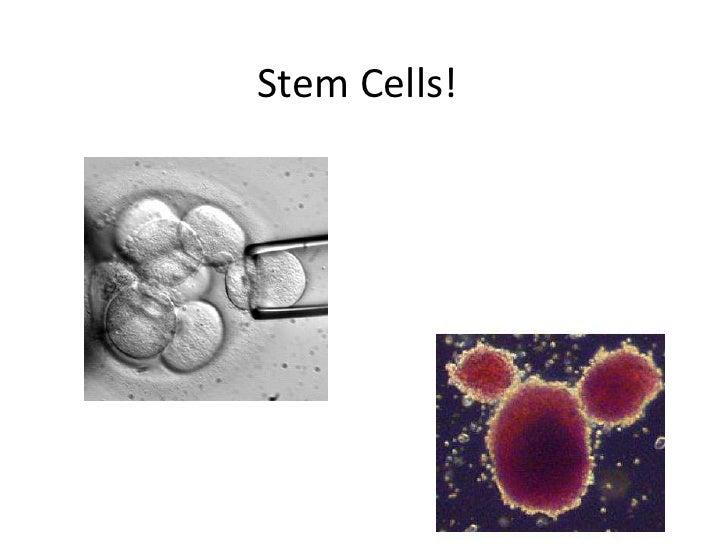 Stem Cells!<br />