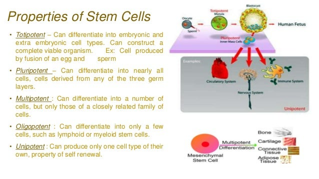 Adult stem cells and growth media