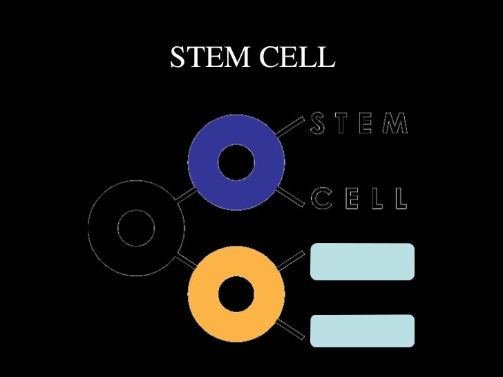 STEM CELL  SCAN – Stem Cell Action Network