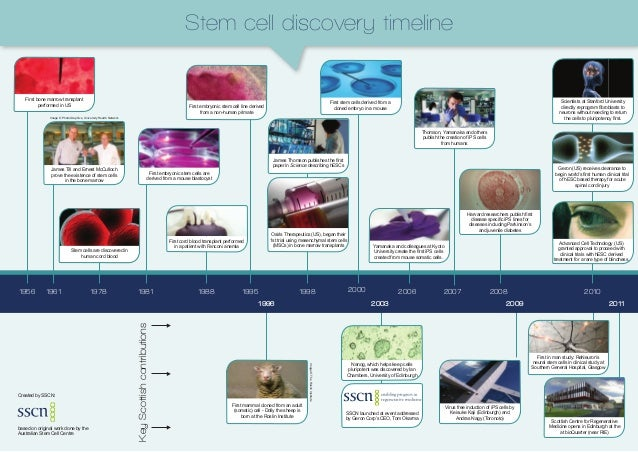 Stem cell discovery timeline   First bone marrow transplant                                                               ...