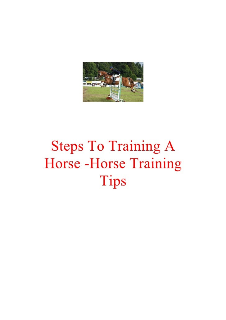 Steps To Training A Horse -Horse Training         Tips