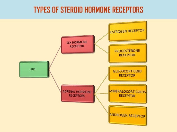 steroids are a type of what macromolecule