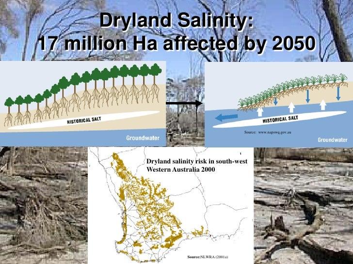 dryland salinity essay