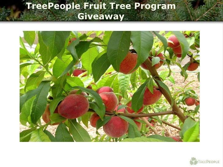 TreePeople Fruit Tree Program Giveaway