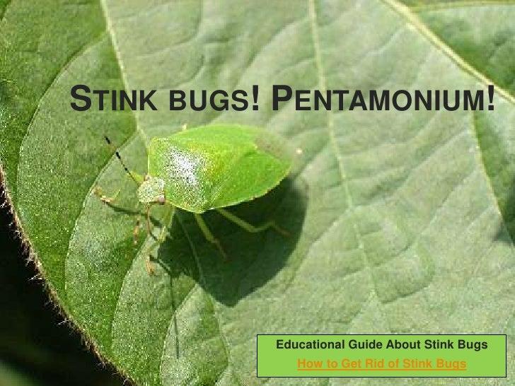 Stink bugs! Pentamonium!<br />Educational Guide About Stink Bugs<br />How to Get Rid of Stink Bugs<br />