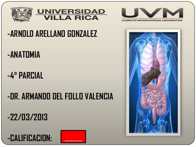 -ARNOLD ARELLANO GONZALEZ-ANATOMIA-4° PARCIAL-DR. ARMANDO DEL FOLLO VALENCIA-22/03/2013-CALIFICACION:   ____
