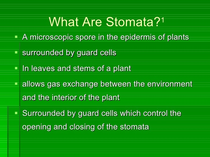 stomata density Stomatal density (sd) is a function of both the number of stomata plus the size of the epidermal cells thus, sd is affected both by the initiation of stomata and the expansion of epidermal cells this expansion is a function of many variables (eg light, temperature, water status, position of leaf on crown, and intra-leaf position), and can.