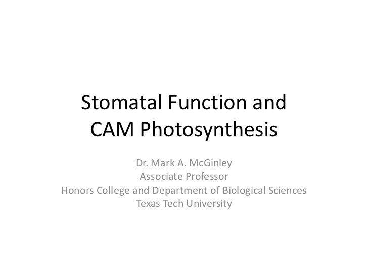 Stomatal Function and     CAM Photosynthesis                Dr. Mark A. McGinley                 Associate ProfessorHonors...