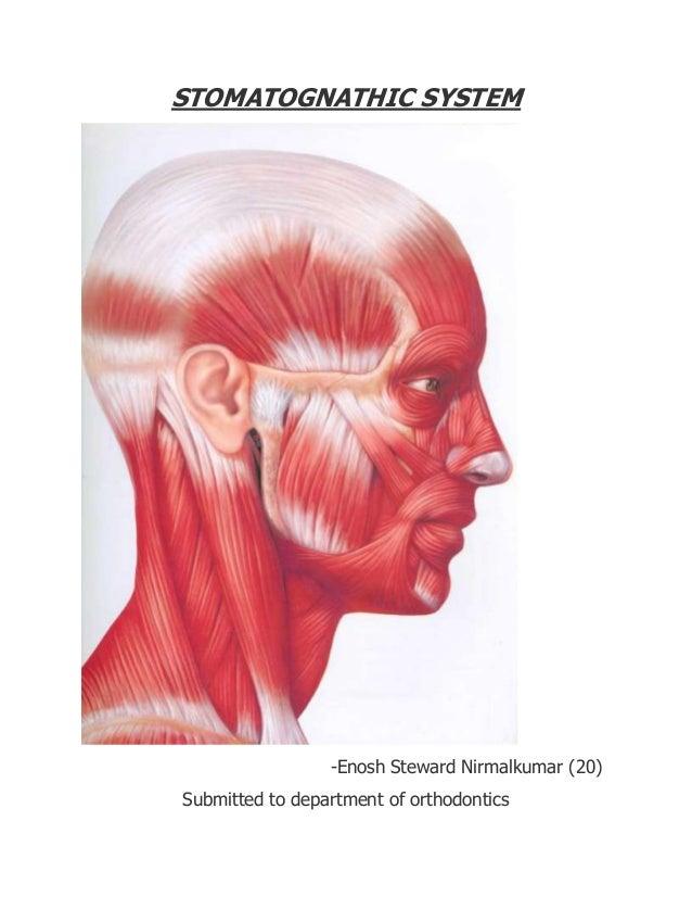 STOMATOGNATHIC SYSTEM -Enosh Steward Nirmalkumar (20) Submitted to department of orthodontics