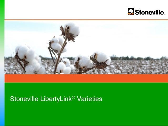 Stoneville LibertyLink® Varieties!