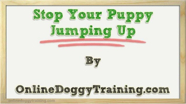 how to get your puppy to stop jumping on you