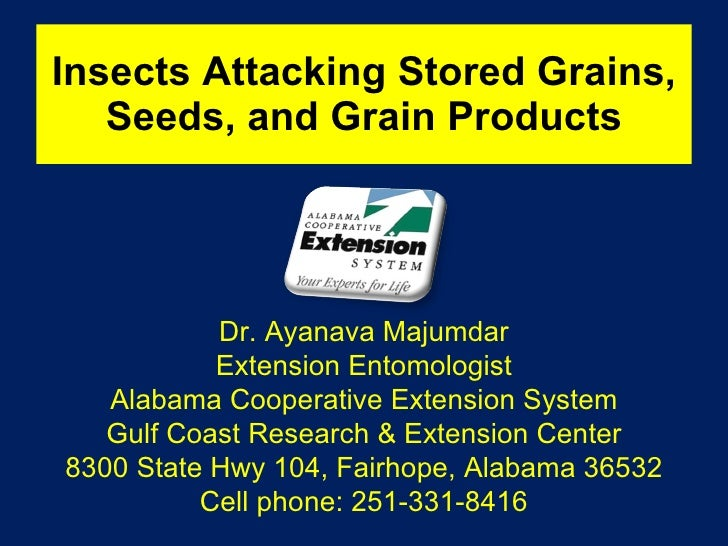 Insects Attacking Stored Grains, Seeds, and Grain Products Dr. Ayanava Majumdar Extension Entomologist Alabama Cooperative...