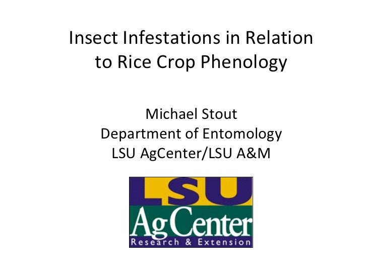 Insect Infestations in Relation to Rice Crop Phenology Michael Stout Department of Entomology LSU AgCenter/LSU A&M