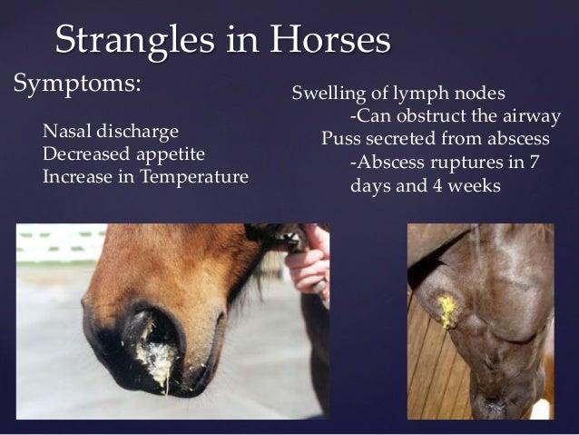 National Equine Health Plan  Equine Disease CC
