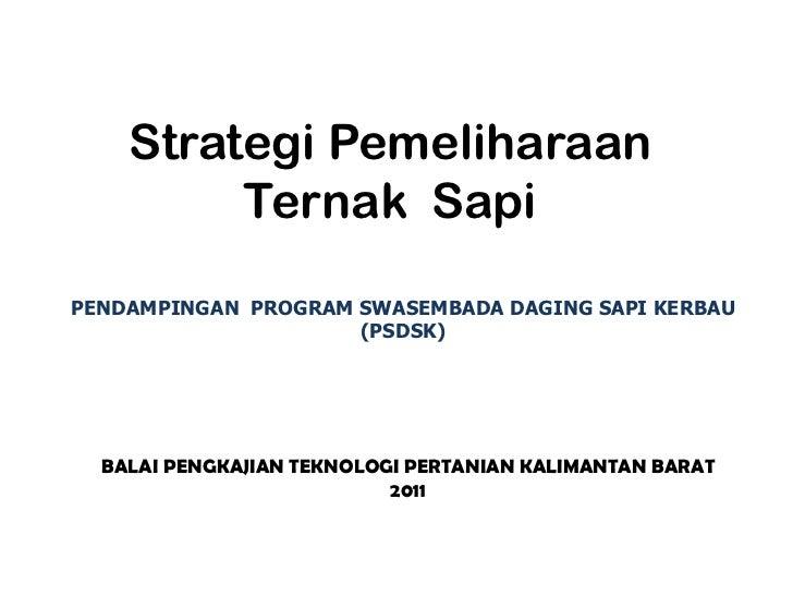 Strategi Pemeliharaan         Ternak SapiPENDAMPINGAN PROGRAM SWASEMBADA DAGING SAPI KERBAU                     (PSDSK)  B...