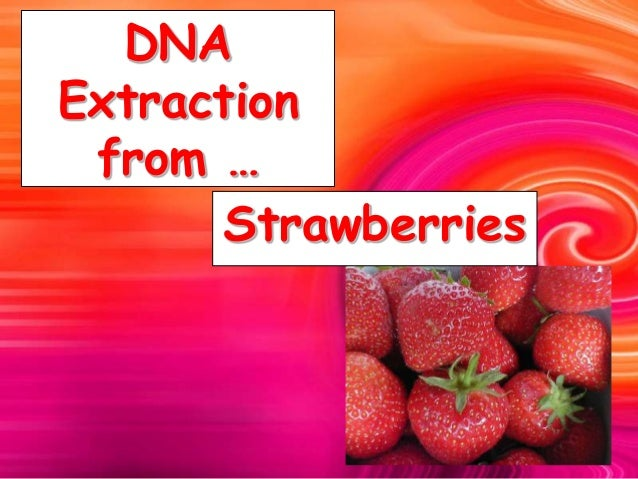 DNA Extraction from … Strawberries