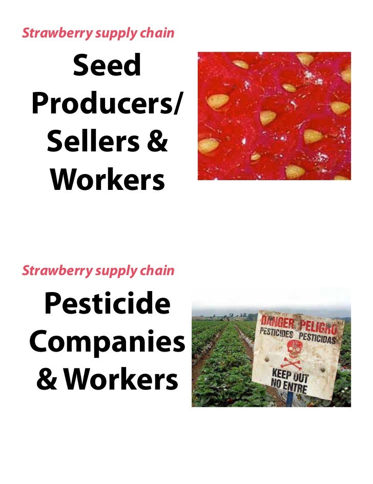 Strawberry supply chain    Seed Producers/  Sellers &  WorkersStrawberry supply chain  Pesticide Companies & Workers