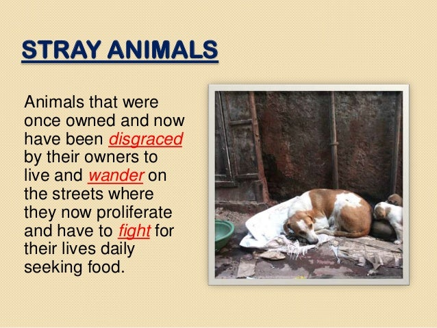 Stray animals statistics