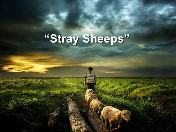 """ Stray Sheeps"""