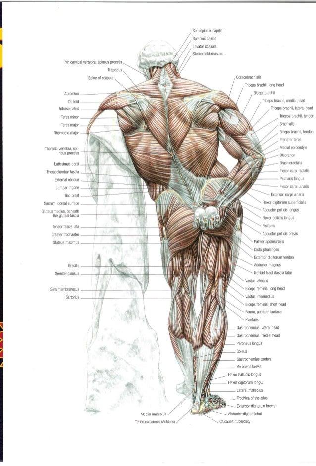 Frederic delavier strength training anatomy f--f.top 2018